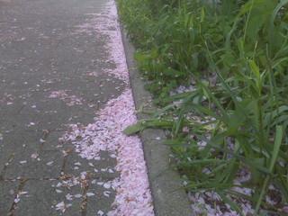 [Bild:Blütenblätterschnee]