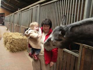 [Bild:Der erste Kontakt mit einem Pferd]