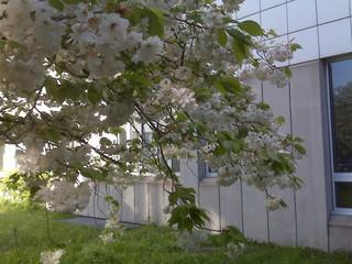 [Bild:Frühling am Büro]