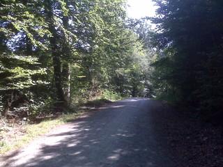 [Bild:Der Walderlebnispfad bietet …..]