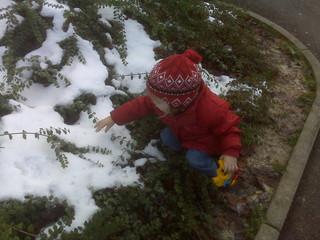 [Bild:Schnee im Gebüsch]